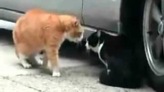 Gadające koty - Oblana klasa maturalna
