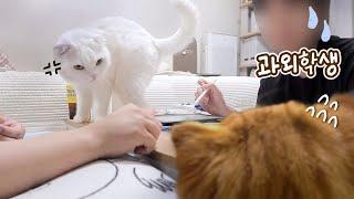 후.. 고양이들 때문에 수업을 못하겠어요..