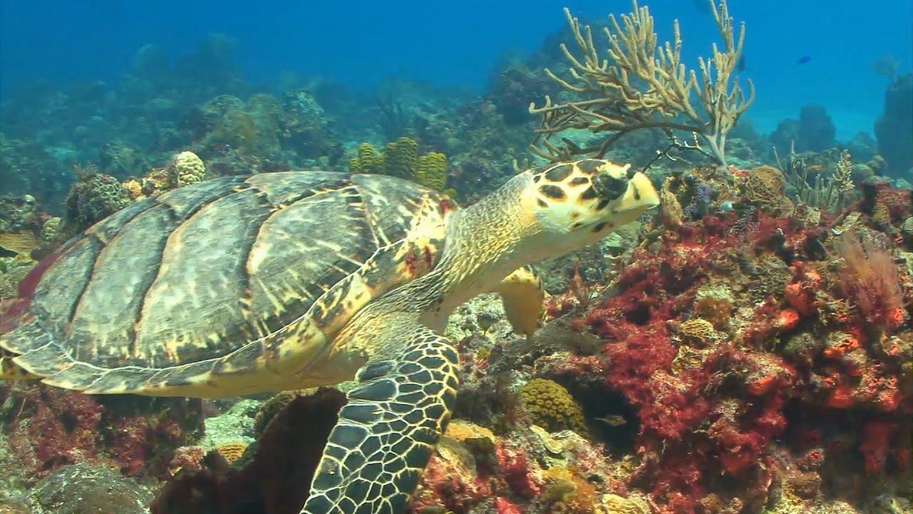 tartarughe marine nuotano nei fondali corallini youtube