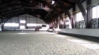 Horse for sale (мерин Ганноверской породы--ППЮ)