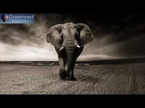 Music for Work and Concentration, Focus Music, Binaural Beats, Study Music for Focus