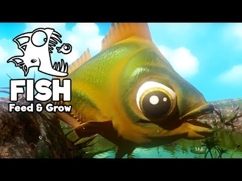 Feed and grow fish gameplay german der gr te goldfisch for Live feeder fish