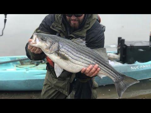 Winter Striped Bass Fishing: Part 1
