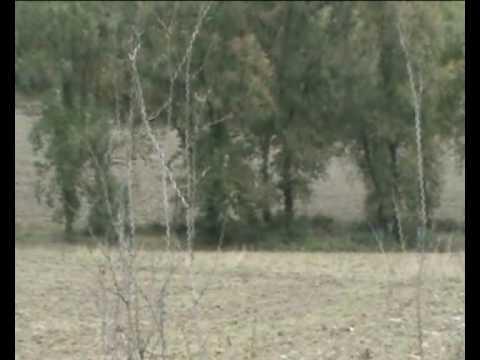 La caccia al cinghiale - 1-11 Volterra