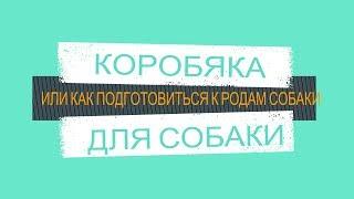 КОРОБЯКА ДЛЯ СОБАКИ(подготовка к родам собаки) Рreparation for childbirth dogs