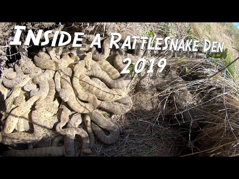 Deuce - Madman Goes Into A Rattle Snake Den..... HELL NO!