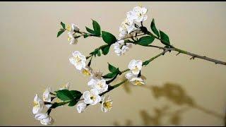 Цветы из гофрированной бумаги - цветущая веточка вишни, мастер-класс