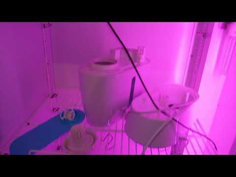 Бытовой холодильник для климатической камеры под сыровял. Нюансы...2