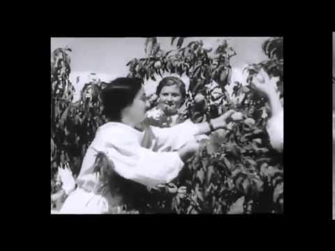 Кто снабжал витаминами Советский Союз?