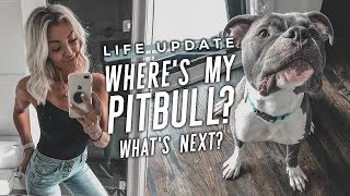 Life Update: Where's My Pitbull? Next Steps? My Heart?