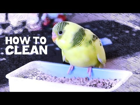 How To Clean A Birdcage?
