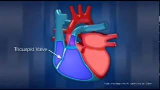 Popular Videos - Human heart & Organ
