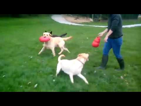Dogs Playing October Week 1 2017