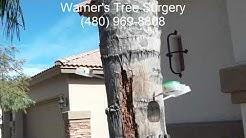 Queen Palm Termites Mesa AZ 480 969 8808 Warner's Tree Surgery 11 016 2017