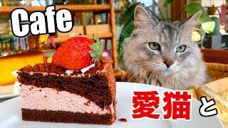 猫のハル、今日はテラスが素敵なカフェに行きます!自前ネコカフェ?! H...