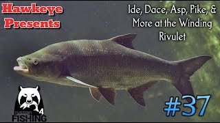 Russian Fishing 4 | #37 - Ide, Dace, Asp, Pike, & More at the Winding Rivulet!