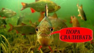 РЫБАЛКА НА ОКУНЯ КАК ОКУНЬ РЕАГИРУЕТ НА ШУМ Зимняя рыбалка 2019 2020 Подводная съемка